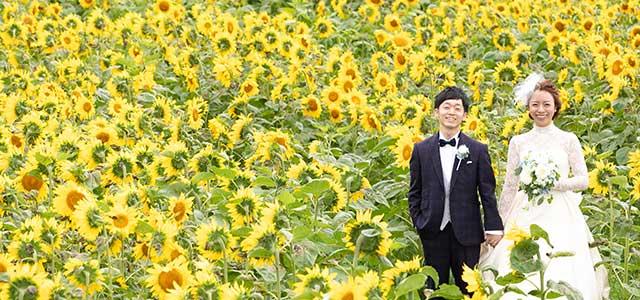 ひまわり咲き誇る夏の北海道を満喫 幻想的な教会で誓うナイトウエディング