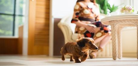 <p>愛犬家ならではの魅力3</p> <p>ご優待価格での宿泊</p> 1